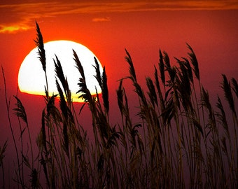 Beach Grass in Silhouette at Sunset by the Lake Michigan Shoreline No.341 A Nature Seascape Photograph