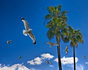 Flock of Gulls with Palm Trees and Clouds in San Diego California No. 1659 - a Travel Scenic Landscape Photograph