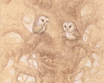 Honeymoon Owls Signed Print