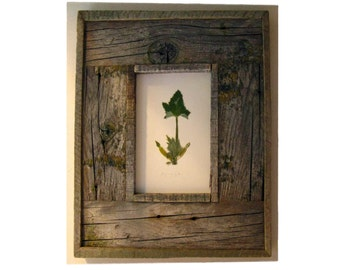 Squash Escutcheon ||| squash blossom in weathered wood