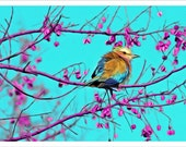 bird photography, nature photography, pink, teal, robins egg blue, magenta,happy, spring, summer