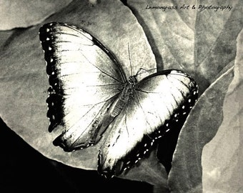 Butterfly (I) Insect Photography, Fine Art Print, Black & White, Beautiful Butterflies Wall Art, Monochrome Home Decor