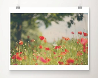 red poppy photograph red flower photograph nature photography summer photograph red poppy print red flower print botanical print