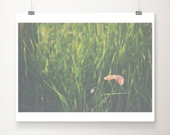red poppy photograph red poppy print red flower photograph red flower print green grass photograph nature photography english decor