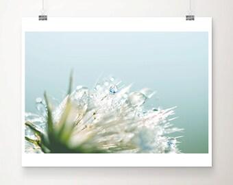 winter photograph dandelion photograph rain photograph dandelion print nature photography macro photography blue home decor