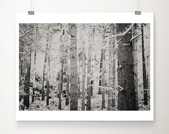 black and white photography woodland photograph snow photograph tree photograph nature photograph winter landscape photograph