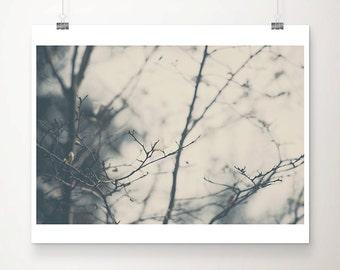 magnolia tree photograph, winter photograph, winter, white, grey, black, cold, nature photography, magnolia, tree