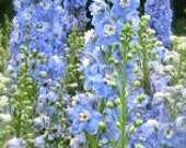 Delphinium Blue Bell Larkspur Tall Cutting Garden Re-Seeding Annual Summertime Bouquets of Fresh Cut Flowers Rare Seeds