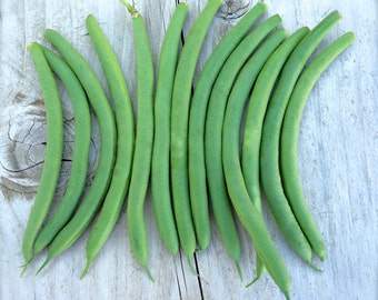 French Filet Bush Bean Organic Heirloom Tavera Rare Slender Variety Seeds Non Gmo