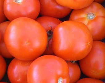 Sophie's Choice Heirloom Tomato Rare Seed Cool Climate Northern and Coastal Gardens Smaller Plants Excellent in Containers