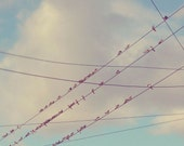 Swallows on a line no2, birds on a wire, line of birds in blue sky with white clouds, old telegraph pole, square photograph print