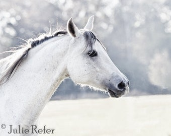 Horse Photography White Horse Equestrian Art