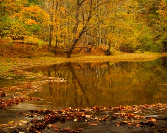 Tinicum Creek in Autumn, Landscape Photograph, Fall Foliage, Yellow, River, Reflection, Zen Art Print, Woodland, Bucks County, Pennsylvania