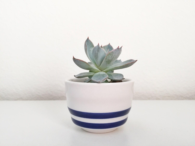 Striped Mini Ceramic Pot Succulent Plant Succulent Planter