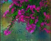 Beautiful Bougainvillea, Floral, Flower, Magenta, Pink, Canvas, S Seema Z