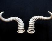 Horns Wearable Costume Fantasy Animal Rubber Lightweight
