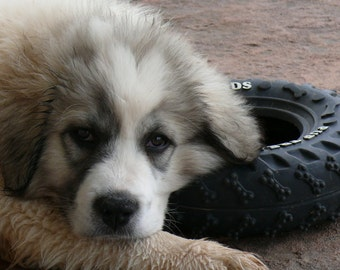 Custom Made to Order Chiengora Yarns aka Custom Dog Yarn