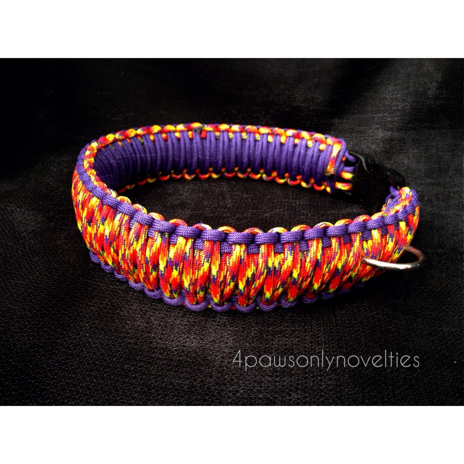 Purple Collar Pet Photography Il Fullxfull Qean