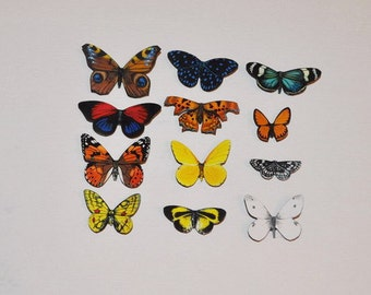 Butterfly Moth Magnets Set of 12 insects Refrigerator Magnets