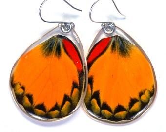 Real Yellow Jezebel Butterfly (Delias oraia) (bottom/hind wings) earrings