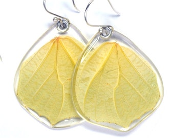 Real White Angled Sulphur Butterfly (Anteos clorinde) (bottom/hind wings) earrings