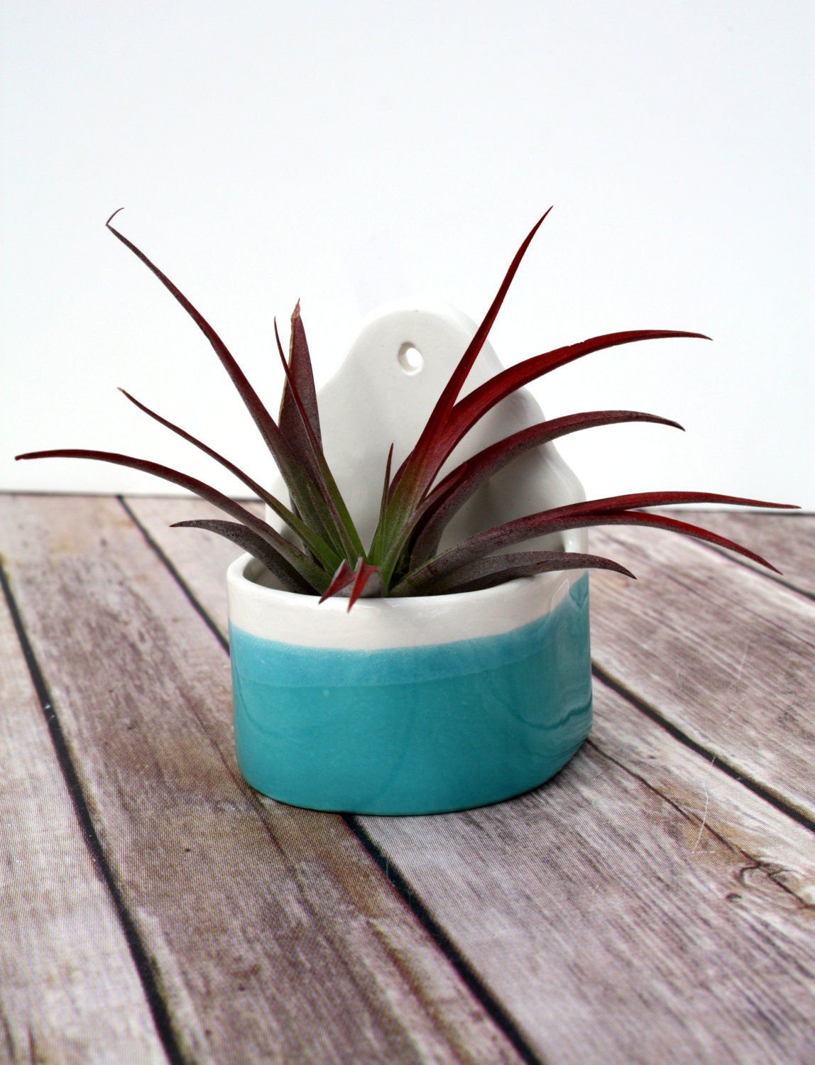 Air Plant Holder Wall Planter Sweet By Boulderdesign On Etsy