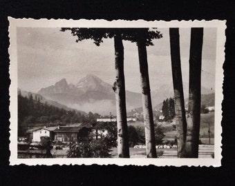 Original Antique Photograph Strange Trees