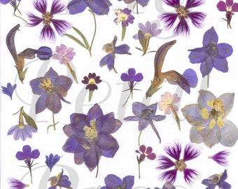 Digital Download Blue Pressed Flowers