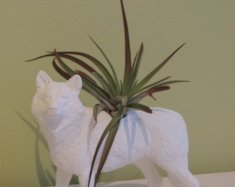 White Wolf Planter / Air Plant Container