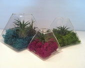 Set of Three, Small, Medium and Large Glass Pyramid Glass Terrariums- Glass Terrariums ONLY