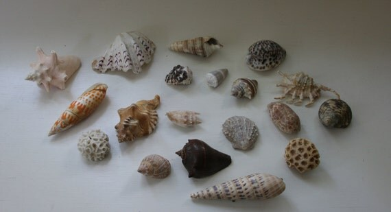 Seashell and Coral Collection - Nineteen pieces