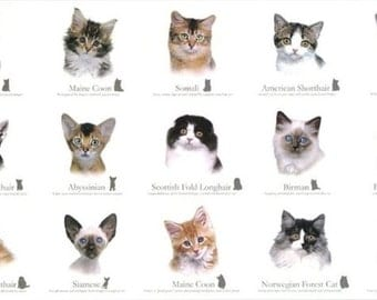Cat Breeds Feline Panel Cotton Quilting Fabric 60cm x 110cm Elizabeth's Studio