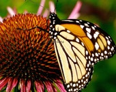 Monarch Butterfly Photo Greeting Card