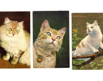 4 Cat/ Kitty Vintage Post Cards, 1950's, Tabby