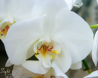 White Orchid Print, flower photography, floral wall art, orchid photo, 5x7 8x10 11x14 fine art print
