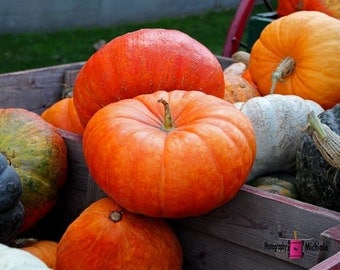 Pumpkins and Gourds (FREE shipping in the U.S.only)--customized card, print or canvas