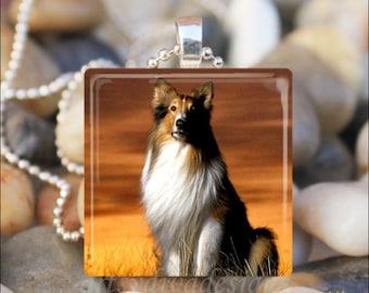 COLLIE DOG SUNSET Collie Pet Dog Love Canine Glass Tile Pendant Necklace Keyring