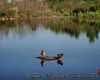 Duck picture, duck photo, duck art print, water duck art, water reflection, Art Photography Reflection of Ducks 8 X 10 Print