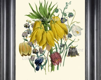 BOTANICAL PRINT Loudon Flower  Art 17 Beautiful Large Yellow Antique Fritillaria Flowers Tropical Garden Nature to Frame