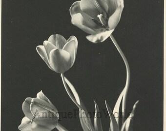 Tulip flowers antique still life art photo