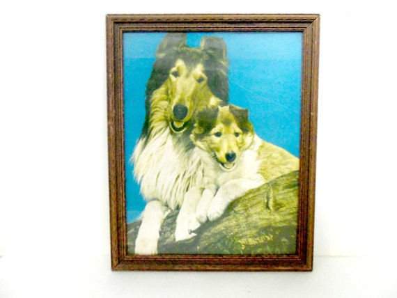 Collie and Collie Puppy, Lassie Picture, Framed Collie Picture, Framed Lassie Picture, 1960s, Framed Collie Print, Dog Lovers, Collie Lovers