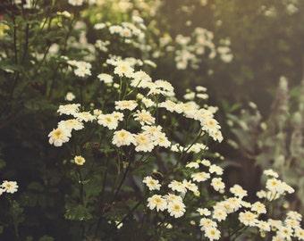 Nature photography, flower photography, garden, flower bed, summer, summertime, 8x10 11x14 16x24 print, fine art photography, wall art