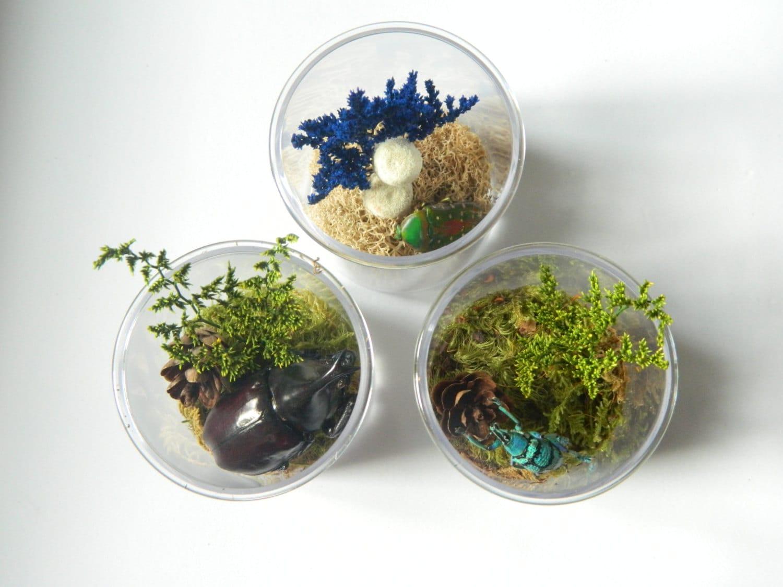 Terrarium Kits For Children Bug Decor By TheAmateurNaturalist