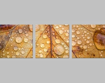Fall Leaf Macro with Rain Drops. Nature Photography. Monochrome Metal Prints. Triptych. FREE SHIPPING.