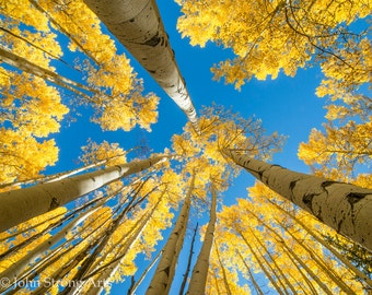 Fine Art Photography, Aspens and Sky, Print