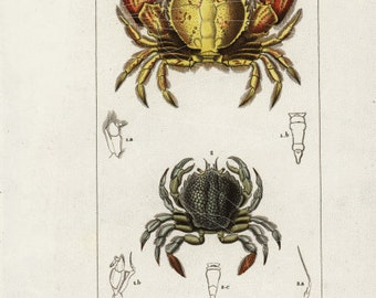 original Antique Hand Colored Print Of  Crabs - CharlesD'Orbigny - Sea life - Ocean
