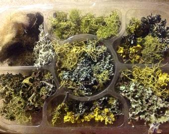 Variety Pack of Woodland Gatherings  - Lichen - Moss - Instant Collection - Terrarium Lichen - Wedding Moss