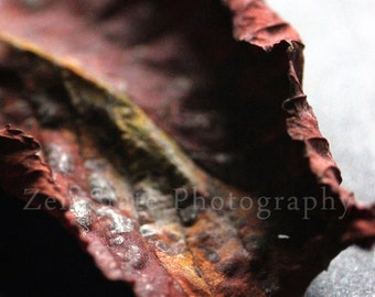 Autumn Leaf Photograph. Fall Leaf Nature Print. Macro Photography. Unframed Photo Print, Framed Photography, or Canvas Print. Home Decor.