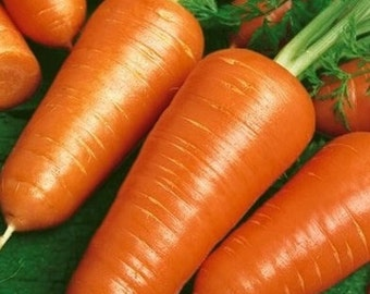 100 - Heirloom Carrot Seeds - Chantenay Red Cored - Heirloom Chantenay Carrot, Red Cored Carrot Seed, Non-gmo Carrot Seed, Non-gmo Vegetable