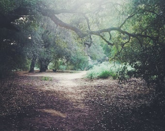 Fall Leaves, Landscape Photography,Tree Wall Art, Nature Photography, Oak Trees